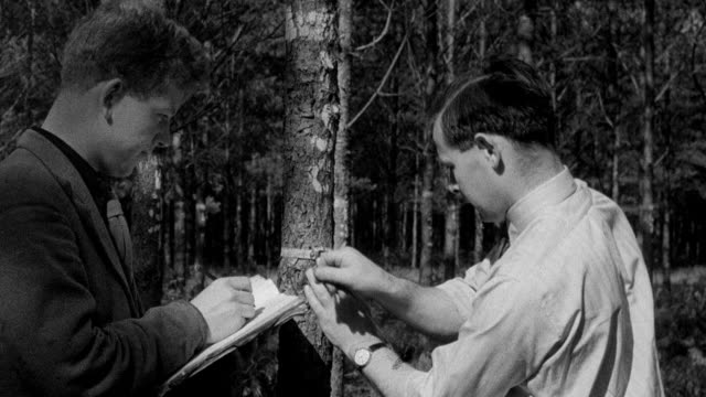 montage forester commission workers gathering cones from trees to extract seeds for planting / united kingdom - forestry industry stock videos & royalty-free footage