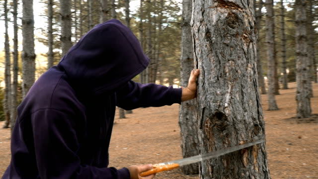 vídeos de stock, filmes e b-roll de árvore da estaca do forester na floresta - forester