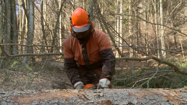 vídeos de stock, filmes e b-roll de hd câmera lenta: forester de tronco de árvore - forester