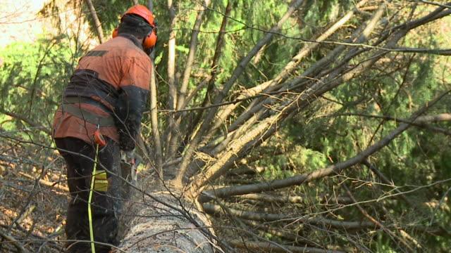 vídeos de stock, filmes e b-roll de hd câmera lenta: silvicultor - forester