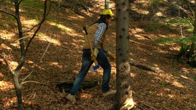 vídeos de stock, filmes e b-roll de forester andando pela floresta - forester
