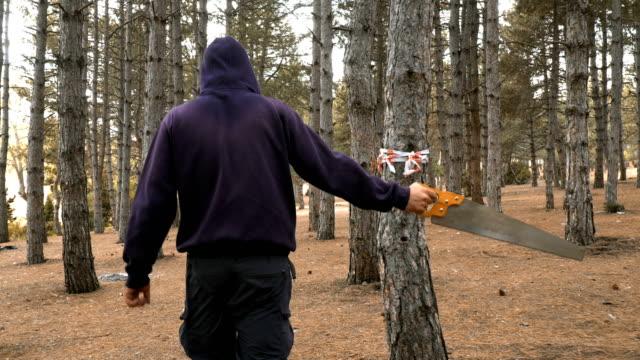 vídeos de stock, filmes e b-roll de forester que anda à árvore da estaca na floresta - forester