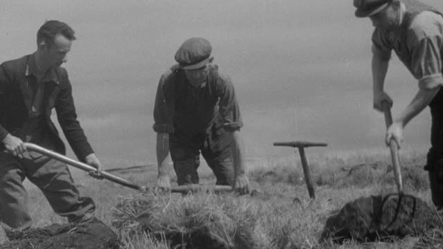 montage foresters digging trenches for draining before planting pines and firs, sheltering the plants, and then exposing them to full sunlight / united kingdom - 1944 stock videos & royalty-free footage