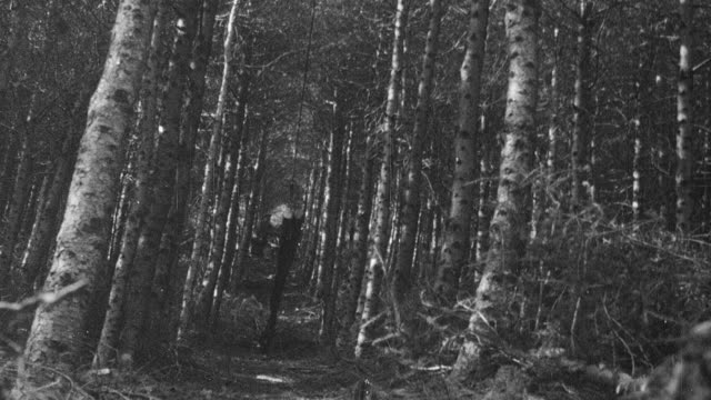 MONTAGE Foresters on a plantation transporting small trees using steel cable / United Kingdom