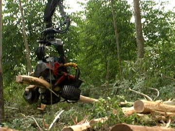 forestry - forestry industry stock videos & royalty-free footage