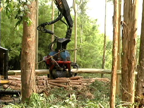 stockvideo's en b-roll-footage met forestry - vernieling