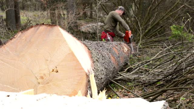 vídeos de stock, filmes e b-roll de silvicultura trabalhador com serra de cadeia - serra elétrica