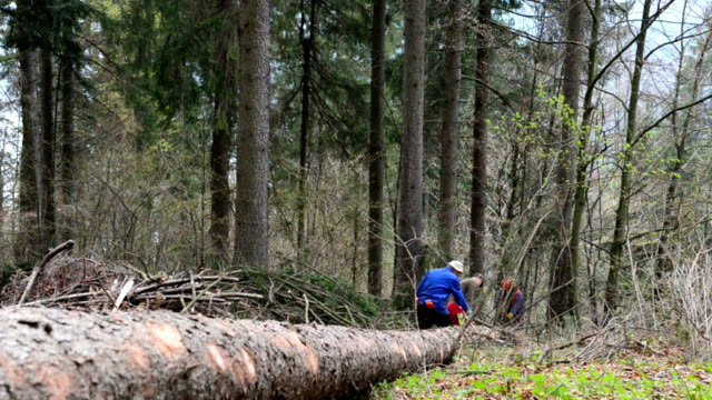 forestry workers with chainsaw - timber stock videos & royalty-free footage