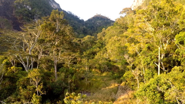 forests and mountains of new guinea - tropical climate stock videos & royalty-free footage