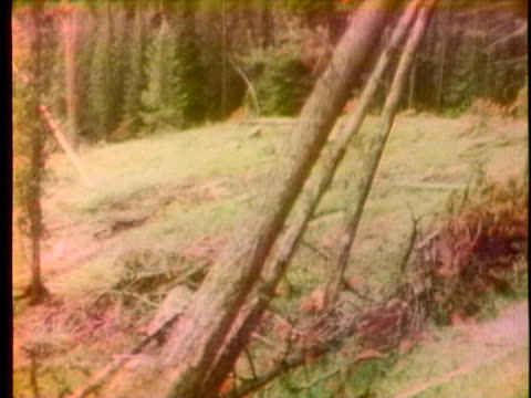 forests in the pacific northwest are ravaged by the tussock moth. - lumberjack stock videos & royalty-free footage