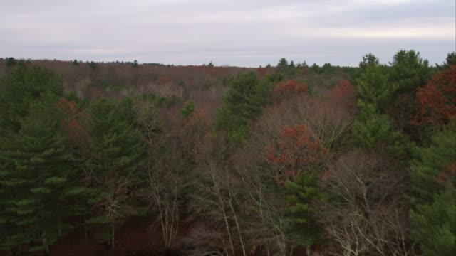 forests near scituate reservoir in western rhode island. shot in november 2011. - artbeats 個影片檔及 b 捲影像