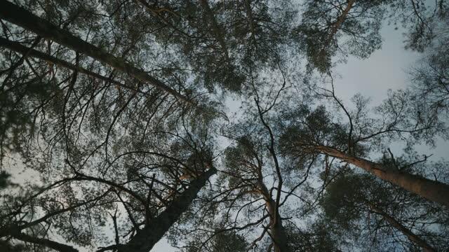 ノルウェーの森:回転する木の天蓋と空 - とげ点の映像素材/bロール