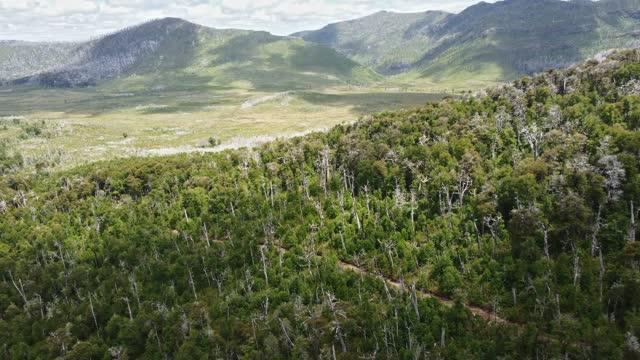 vídeos y material grabado en eventos de stock de bosques en las montañas del parque nacional tolhuaca - carretera de tierra