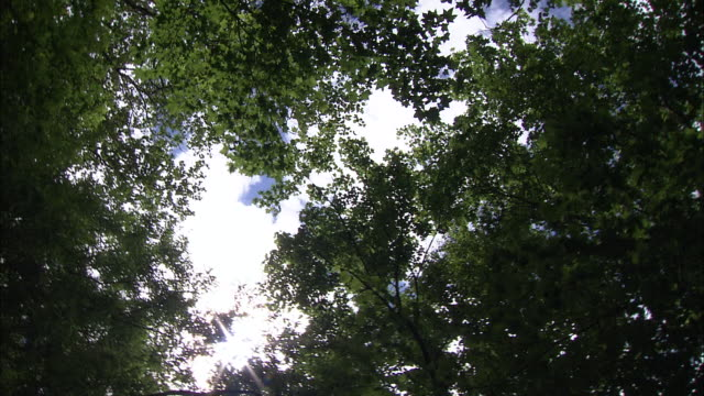 forests_daisetsuzan volcanic group, hokkaid_ - daisetsuzan volcanic group stock videos and b-roll footage