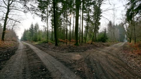forked forest path in early spring, odenwald, hesse, germany - choice stock videos & royalty-free footage