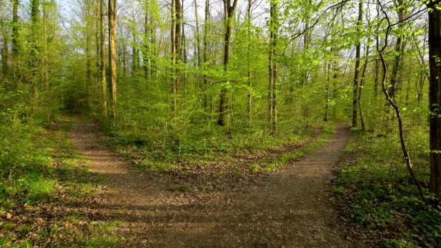 forked forest path in spring, hessigheim, neckarhalde, river neckar, baden-württemberg, germany - sentiero video stock e b–roll