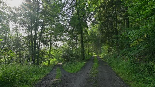 vidéos et rushes de forked forest path in summer - voie piétonne