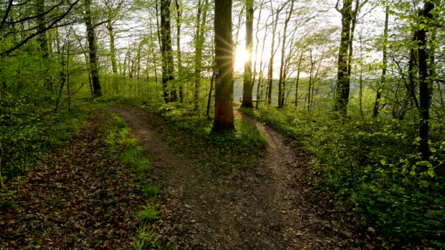 Forked forest path with sun in spring, Hessigheim, Neckarhalde, River Neckar, Baden-Württemberg, Germany