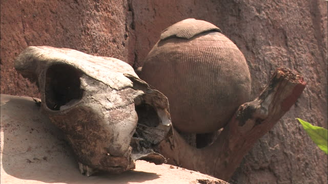 a forked log holds a dried gourd where an animal skull sits nearby. - zucca legenaria video stock e b–roll