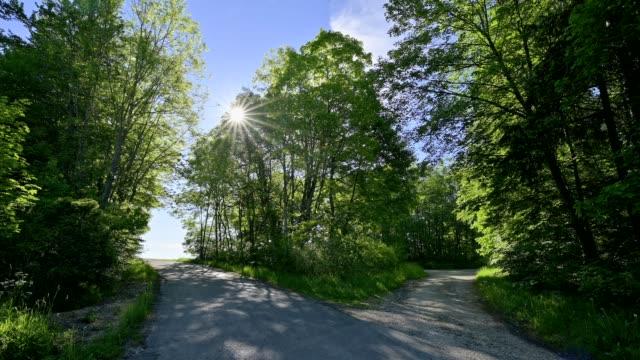 stockvideo's en b-roll-footage met forked road in forest with sun, swabian alb, baden-württemberg, germany - vork