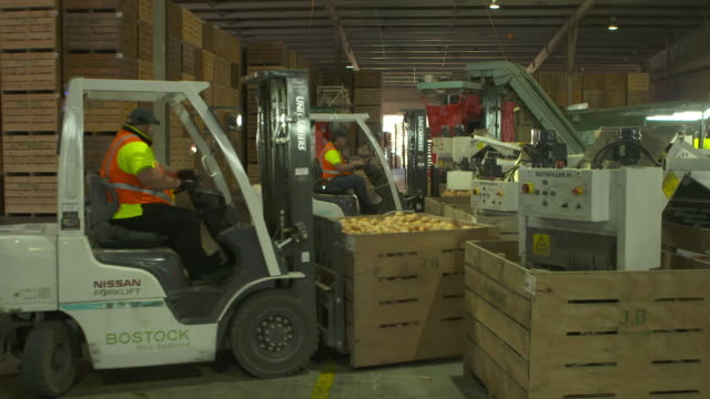 Forklift lifting crate of onions at processing warehouse