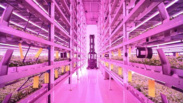 vídeos y material grabado en eventos de stock de carretilla elevadora que se mueve entre bastidores de varias capas en granja vertical - hidropónica
