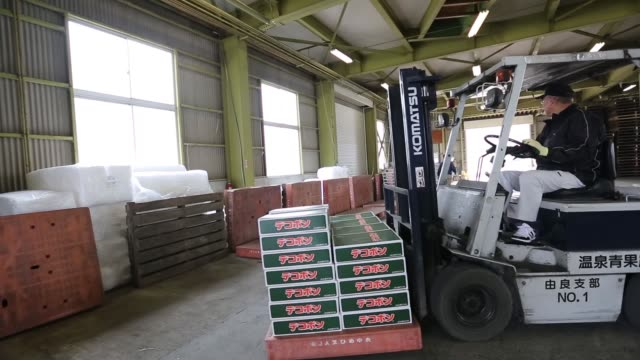 A forklift operator transports a pallet of dekopons a Japanese citrus fruit in the warehouse of an agricultural cooperative on Gogo Island in...