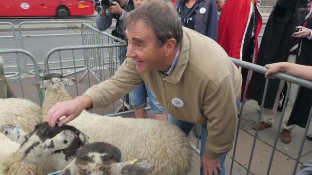 former formula 1 driver nigel mansell turns into a herder driving sheep across london bridge in an annual tradition to promote wool trade that dates... - herder stock videos & royalty-free footage