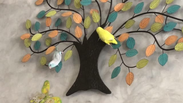 forpus bird playing together in room - two animals stock videos & royalty-free footage