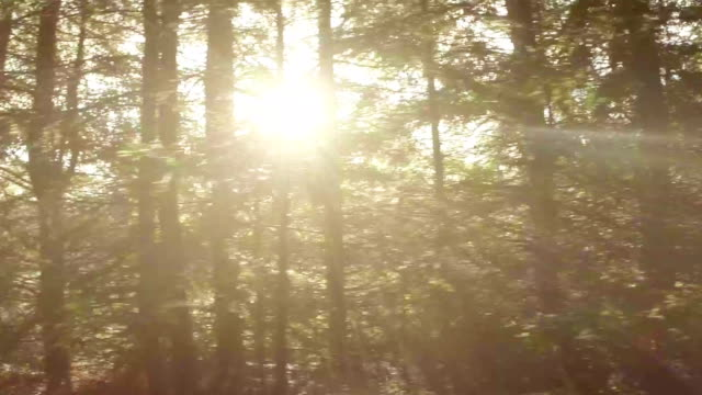 forrest and trees through the car window - moving past stock videos & royalty-free footage