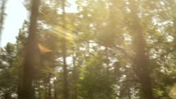 Forrest through the car window