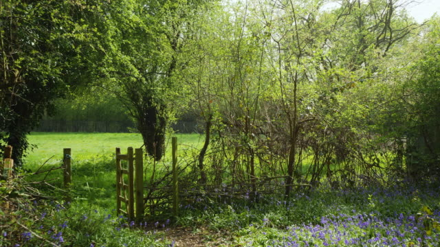 forward pov track through bluebells and gate to open meadow - national park stock videos & royalty-free footage