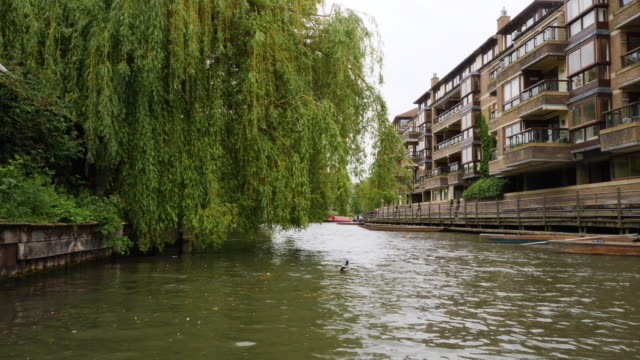 forward tracking shot moving along the river cam, cambridge. - cambridge england stock videos and b-roll footage
