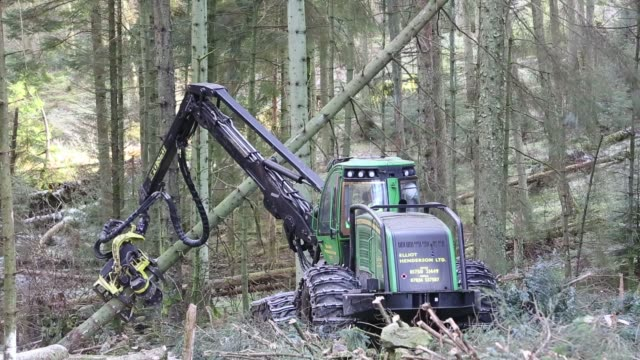 a forwarder, a specialist logging machine cutting down timber in grizedale forest, lake district, cumbria, uk. - forestry industry stock videos & royalty-free footage