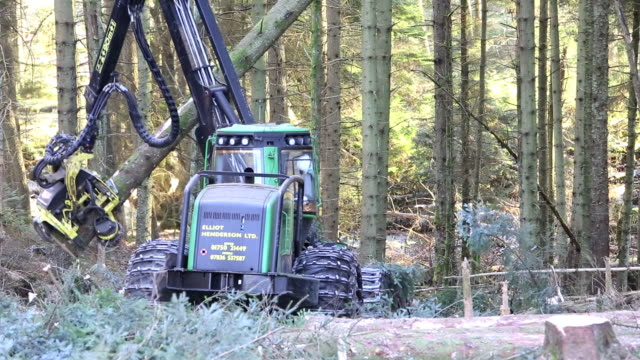A forwarder, a specialist logging machine cutting