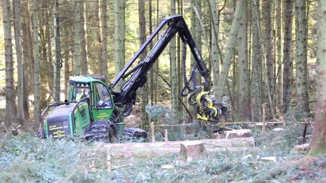 A forwarder, a specialist logging machine cutting