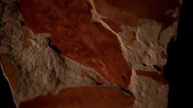 vídeos y material grabado en eventos de stock de cu fossil rock on turn table/ muldersdrift/ south africa - fundido en negro