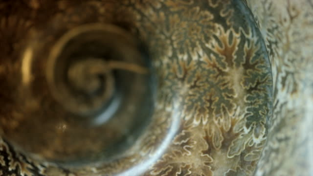 vídeos de stock e filmes b-roll de fossil - concha parte do corpo animal