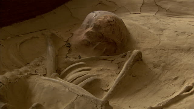 a fossilized human skeleton is on display in a museum. available in hd - tierisches skelett stock-videos und b-roll-filmmaterial