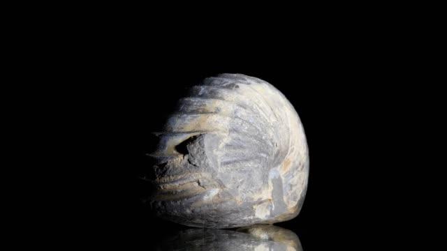 vídeos de stock, filmes e b-roll de nautilus fossilizados, transformando em preto - jurássico