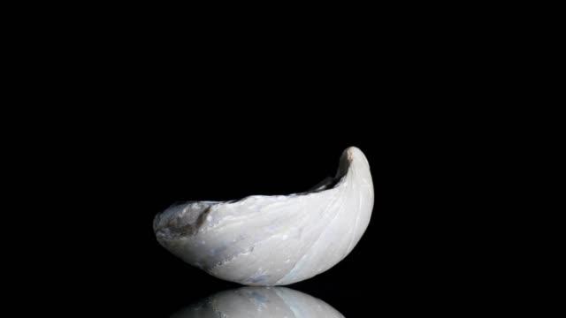vídeos de stock, filmes e b-roll de mariscos fossilizados transformando em preto - jurássico