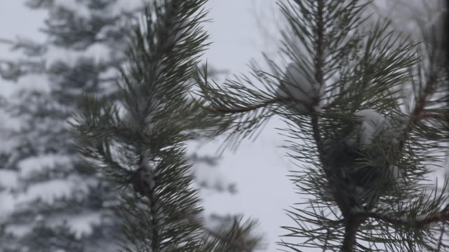 foul winter weather - 水の形態点の映像素材/bロール