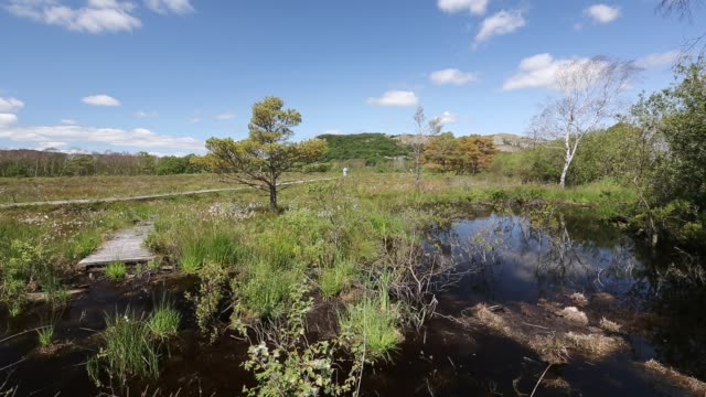 foulshaw nature reserve, a lowland raised bog in south cumbria, uk, planted by the forestry commission, years ago, it is now being restored to its former condition. - nature reserve stock videos & royalty-free footage
