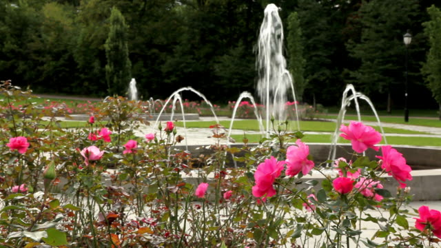 Fountain and roses in a park.