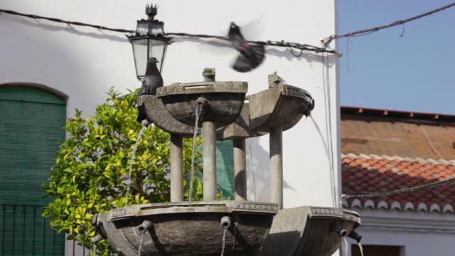 fountain at plaza antiguo - 小さめのハト点の映像素材/bロール