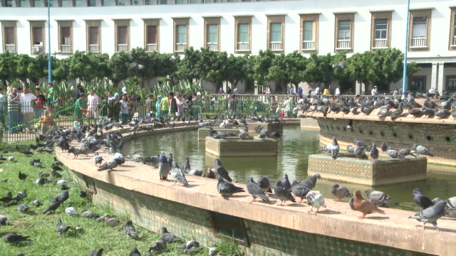 ws fountain full of pigeons in city park with strollers  /casablanca, unspecified, morocco - casablanca morocco stock videos & royalty-free footage