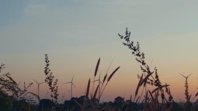 vidéos et rushes de herbe de la fontaine (éventuellement rose champagne) se déplaçant dans le vent avec le lever du soleil. - {{relatedsearchurl(carousel.phrase)}}