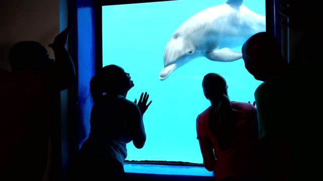 fyra vuxna på aquarium visning delfiner under vattnet - djurpark bildbanksvideor och videomaterial från bakom kulisserna