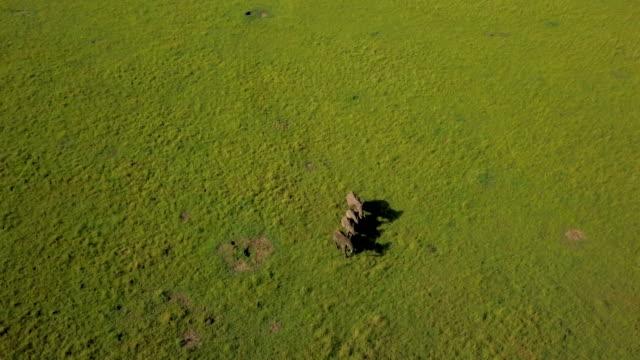stockvideo's en b-roll-footage met four african elephants, masai mara, kenya, africa - kleine groep dieren