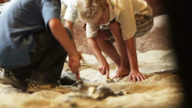 ms four boys (6-7, 8-9) brushing sand from fossils at excavation site in natural history museum, lehi, utah, usa - lehi stock videos & royalty-free footage